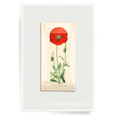 Red Poppy Stem Decoupage Glass Tray